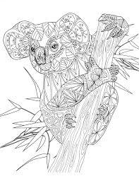 koala bear coloring page koala amazing animals colouring pages by joenay inspirations