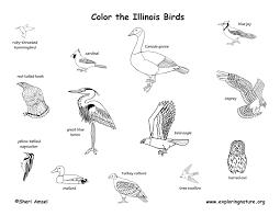 Illinois habitats mammals birds amphibians reptiles