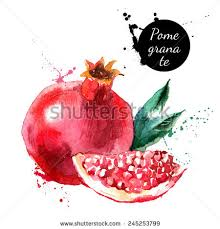 pomegranate stock images royalty free images u0026 vectors shutterstock