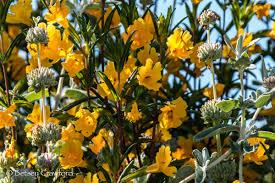 flowering native plants retaining paradise gardening with native plants