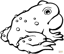 american toad coloring page free printable coloring pages