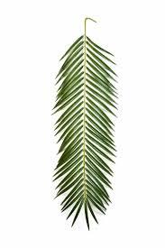 sapin de noel artificiel plus vrai que nature les 25 meilleures idées de la catégorie arbre artificiel sur