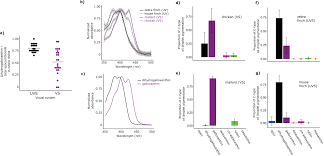 complementary shifts in photoreceptor spectral tuning unlock the