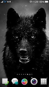 imagenes de fondo de pantalla lobos fondos descarga pantalla lobos noche lobo fondos 4k apk última