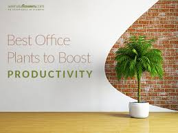 best plant for office best office plants to boost your productivity pollennation