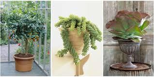 Best Indoor Plants For Oxygen by Indoor Plants Pictures