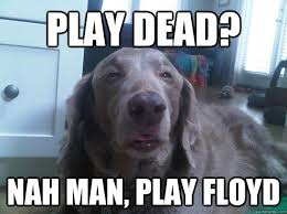 Confused Dog Meme - the dog meme for your friend who still quotes dazed and confused