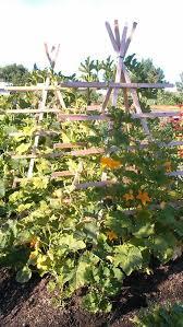 383 best vertical gardening images on pinterest vegetable garden