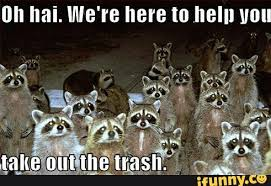 Racoon Meme - what do you meme ana spoke author