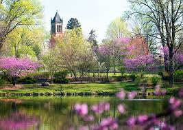 Iowa State Campus Map by I Love The Purple Flowering Trees On Campus At Iowa State Someday
