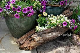 wonderful diy log planter