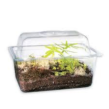 bog plant terrarium set with terrarium