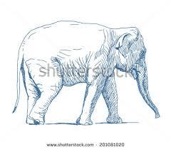asian elephant vectors download free vector art stock graphics