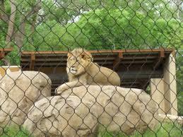 Zoo Lights Salt Lake City by Hogle Zoo African Savanna Utah U0027s Adventure Family