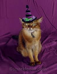 Halloween Costumes Cats Wear 10 Tips Cat Wear Halloween Costume