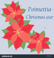 florabunda florist loughrea archives discover christmas floral christmas flower stock vectors vector clip art shutterstock retro card with poinsettia star home decorators