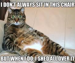 Random Cat Meme - random images cat meme wallpaper and background photos 34633158