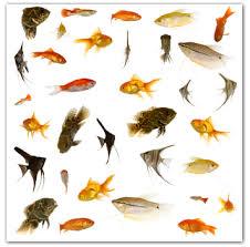 fish aquariumpros inc minnesota part 2