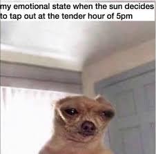 Sad Dog Meme - 4 depressing meme accounts for s a d season solidarity the fader