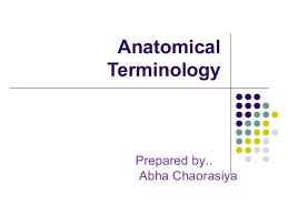 Human Anatomy Terminology Anatomical Position Ppt 1