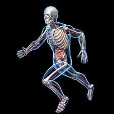 Google Human Anatomy Human Anatomy Ra Android Apps On Google Play