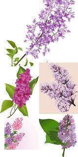 lilac flower vector backgrounds vector graphics blog