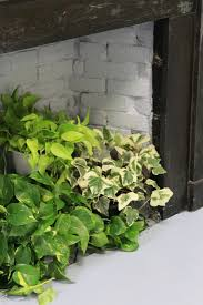 wall mounted herb garden diy a living wall for the office lazy person u0027s edition gardenista