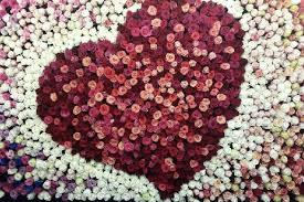 strangers flowers ecuador roses blossom in guangzhou guangdong www newsgd