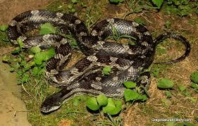 Found A Snake In My Backyard Nesting Birds In The Yard Of My Marietta Ga Home Gregs