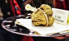 where can you buy truffles how to choose white truffles