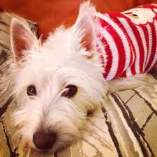 holiday besties archives bestie westie cute dogs dog toys and