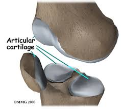 Nerves In The Knee Anatomy Articular Cartilage Tears Of The Knee Houston Methodist