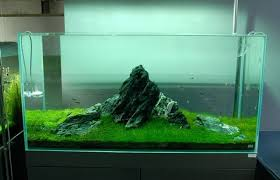 Mountain Aquascape Aquascape U2013 Basic Principles And Elements Of Landscaping Under Water