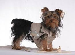 Yorkie Halloween Costumes 100 Pet Costumes Images Animals Carnival