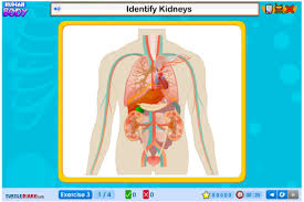 Online Human Body Human Anatomy Online Games At Best Anatomy Learn