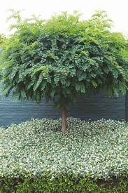 403 best garden trees and bushes images on garden
