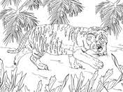 snow tiger coloring page tigers coloring pages free coloring pages