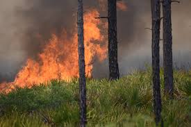 Wildfire 3 Wheel Car Review by Three Schools Closed Due To Wildfire Smoke Wtsp Com