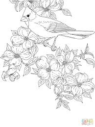 50 state flowers coloring pages ohio bird and flower click view