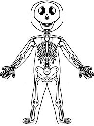 100 ideas human skeleton coloring page on gerardduchemann com