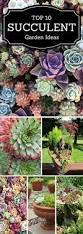 best 25 succulents garden ideas on pinterest succulents