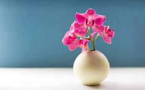 Flower Orchid Flower Wallpaper
