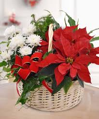 poinsettia garden basket flowers and gifts boesen the
