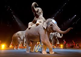 Barnes And Bailey Circus The Downfall Of The Ringling Bros And Barnum U0026 Bailey Circus