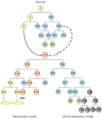 stem cells in cancer instigators and propagators journal of