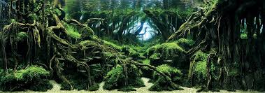 Aquascape Design Layout Aquascaping U0027 Is Zen Like Underwater Design You U0027ll Obsess Over