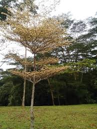file layered tree jpg wikimedia commons