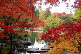 superb japanese garden pictures 132 japanese garden pictures