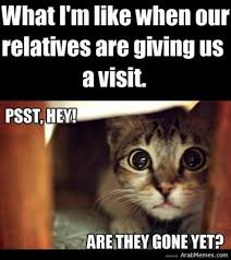 Arab Memes Tumblr - funny pets pictures lol pics in snow tumblr in costumes to own and