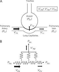 canula fiore pressure and flow controlled media perfusion differently modify